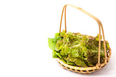 Lettuce that was served in a basket Stock Image