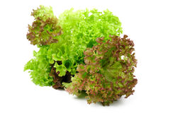Lettuce on a white Royalty Free Stock Photos