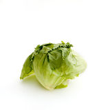 Lettuce on White Stock Image