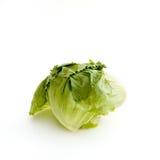 Lettuce on White Stock Image
