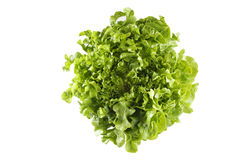 Lettuce on white background. Curly green salad on white background Royalty Free Stock Photo