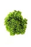 Lettuce on White Background Royalty Free Stock Photo