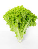 Lettuce on a white background Stock Photo