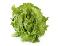 Lettuce on white background Royalty Free Stock Photography