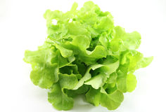 Lettuce. On a white background Stock Image