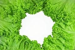 Lettuce on white background Stock Images