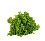 Lettuce on white background Stock Photos