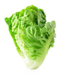 Lettuce on white background Stock Image