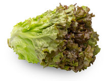 Lettuce in a white background Stock Images