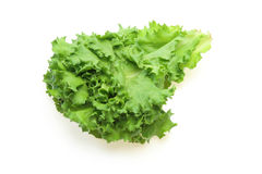 Lettuce in a white background Royalty Free Stock Photos