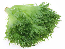 Lettuce in a white background Stock Photos