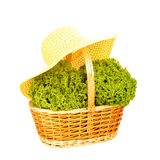Lettuce in wicker basket and straw hat Stock Images