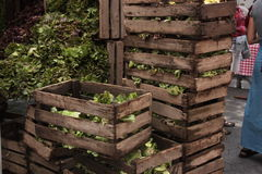 Lettuce in wooden crate boxes, at farmer's market Stock Images