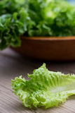 Lettuces Royalty Free Stock Photography