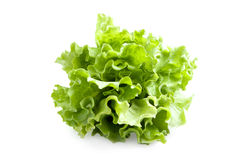 Lettuces leaves Royalty Free Stock Image