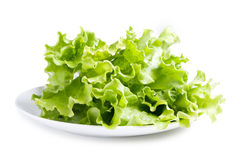 Lettuces leaves on plate Royalty Free Stock Images