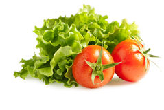 Lettuces salad with tomatoes Royalty Free Stock Image