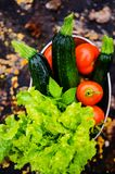 Lettuces, tomatoes  and zucchinis Stock Photography