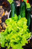 Lettuces and zucchinis Royalty Free Stock Images