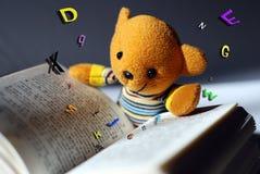 Lettura dell'orso del giocattolo Fotografia Stock