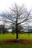 Lettura della giovane signora in Hyde Park, Londra, Regno Unito Immagine Stock Libera da Diritti
