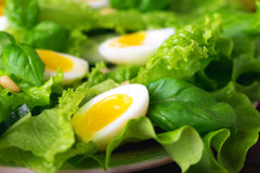 Letucce, cucumber, spinach, basil and quail eggs salad Stock Images