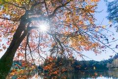 Letzt vom Herbstlaub Stockbilder