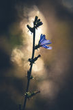 Letzte Blume des Herbstes Lizenzfreies Stockbild