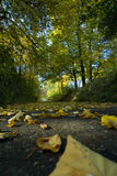 Letzte Herbstblätter Lizenzfreie Stockfotografie