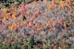 Letzte Herbstfarbbaumantenne Stockbilder