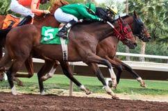 Letzte Pferderennen in Arizona bis Fall Lizenzfreies Stockfoto