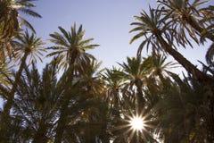 Letzte Strahlen von Sun glänzend durch Oase stockbilder