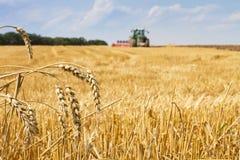 Letzte Strohe nach der Ernte und Traktor, die das Feld pflügen Lizenzfreies Stockfoto