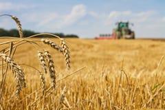 Letzte Strohe nach der Ernte und Traktor, die das Stoppelfeld pflügen Stockfoto
