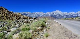 Letzte Wüstenansicht vor Bergen, einzige Kiefer, Kalifornien, USA stockfotografie