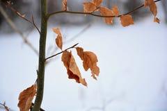 Letzte Winterblätter stockfotografie