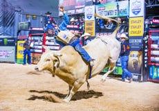 Letzter Cowboy Standing Lizenzfreie Stockbilder