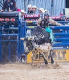 Letzter Cowboy Standing Lizenzfreie Stockfotografie