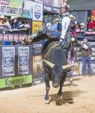 Letzter Cowboy Standing Stockfotografie