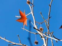 Letzter Herbstlaub Stockbild
