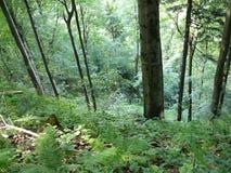 Letzter Rest in einem ruhigen Wald Stockbilder