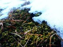 Letzter Schnee Stockfotografie