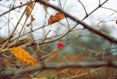 Letzter Tag des Herbstes Stockbild
