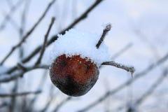 Letzter trockener Apfel auf den Niederlassungen im Schnee lizenzfreies stockbild