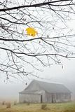 Letztes Ahornblatt auf einem Baum lizenzfreies stockfoto