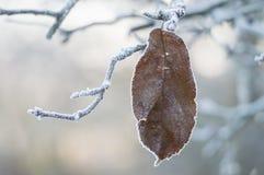 Letztes Blatt im tiefen Winterfrost Stockfotos