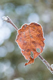 Letztes Blatt im tiefen Winterfrost Stockbild