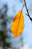 Letztes Herbst-Blatt Lizenzfreies Stockfoto