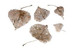 Letztes Jahr ` s Blätter stockbilder