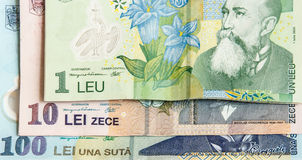 Leu Stock Photo